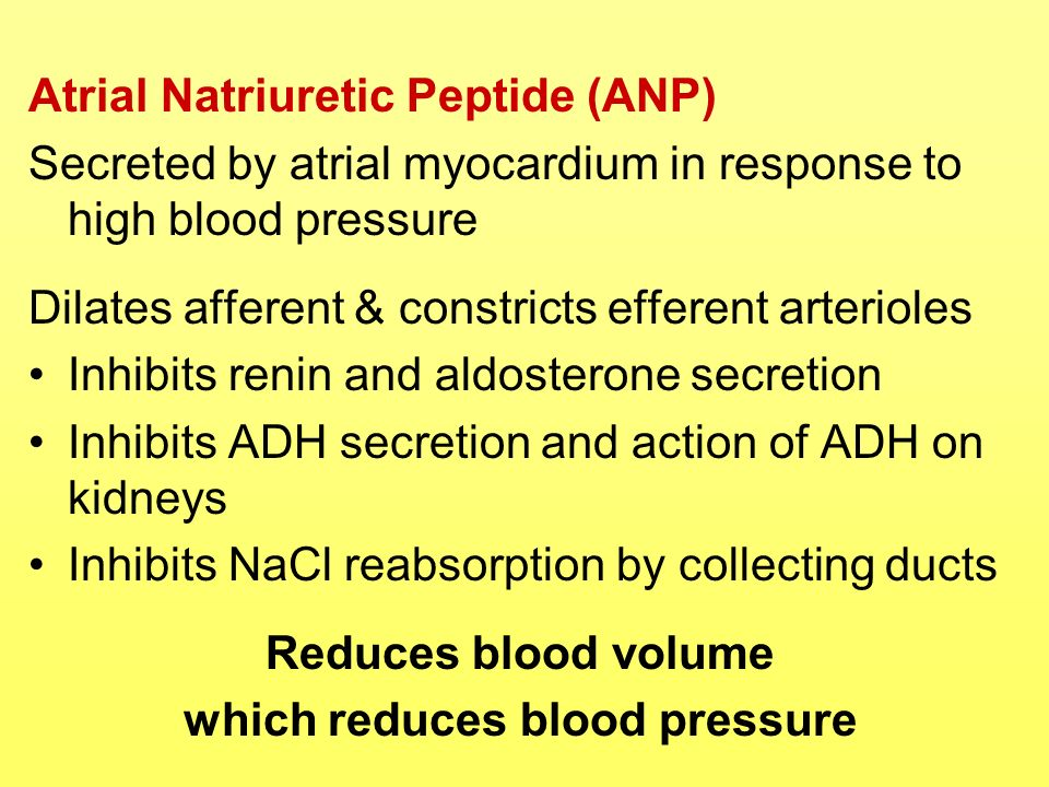 Atrial Natriuretic Peptide (ANP) Secreted by atrial myocardium in response to high blood pressure Dilates afferent & constricts efferent arterioles In