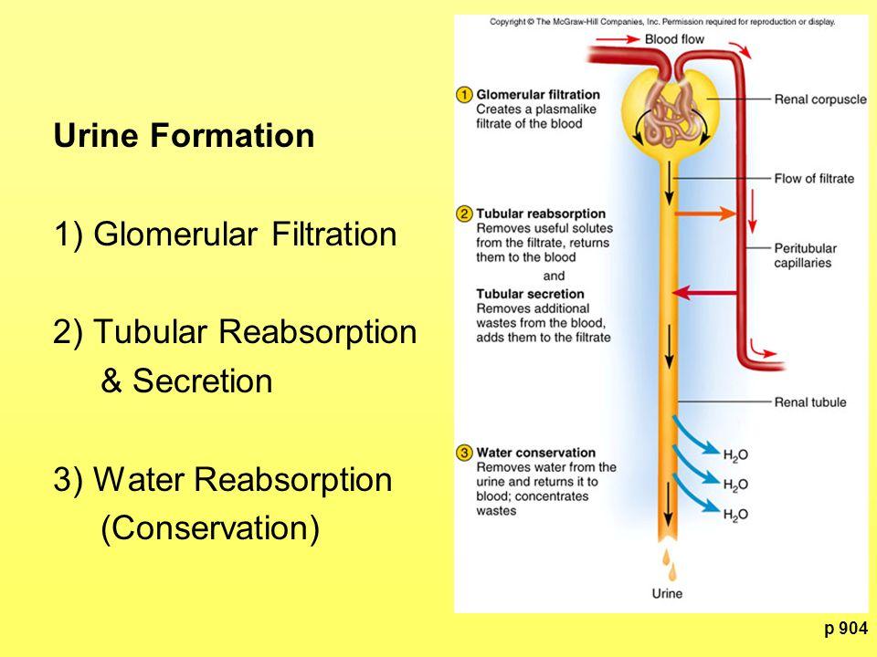 p 908 GFR Control 1) Autoregulation: Tubuloglomerular Feedback = Juxtaglomerular apparatus monitors fluid entering DCT and adjusts GFR to maintain homeostasis