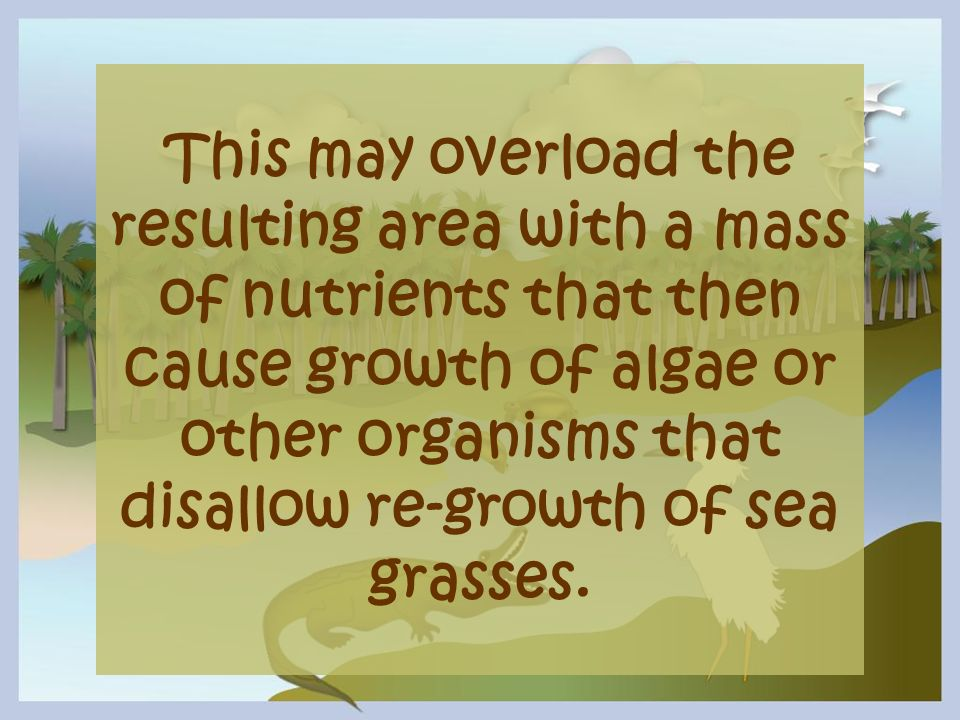 This may overload the resulting area with a mass of nutrients that then cause growth of algae or other organisms that disallow re-growth of sea grasse