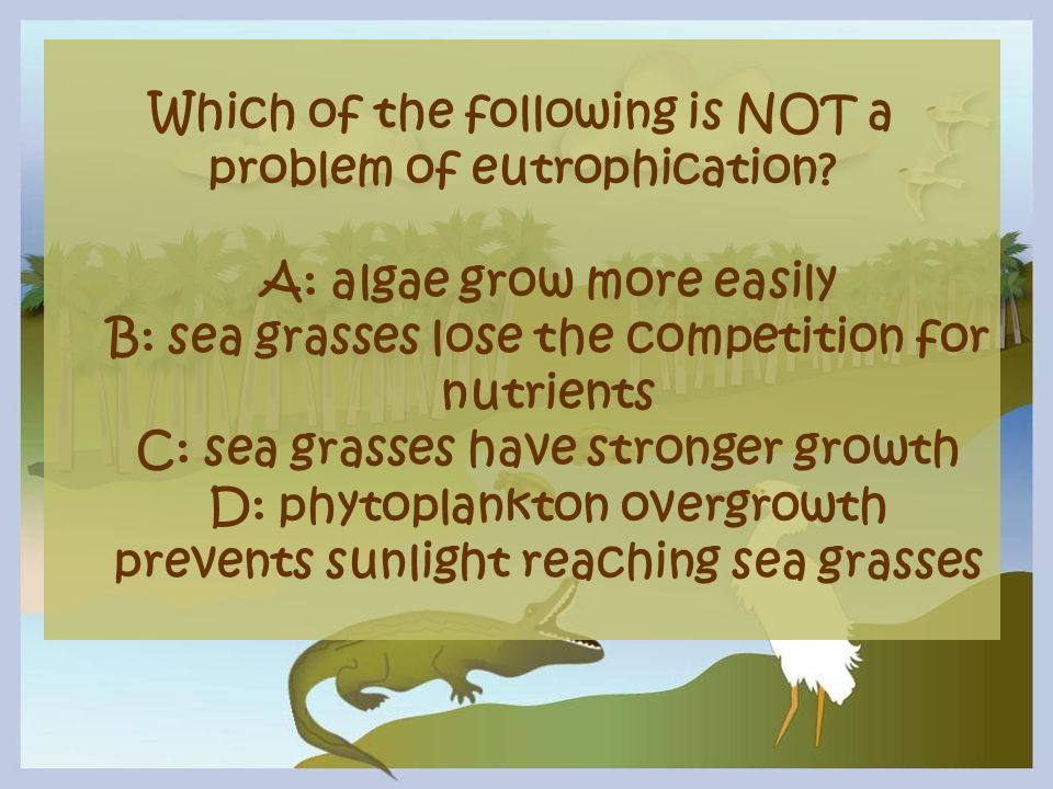 Which of the following is NOT a problem of eutrophication? A: algae grow more easily B: sea grasses lose the competition for nutrients C: sea grasses