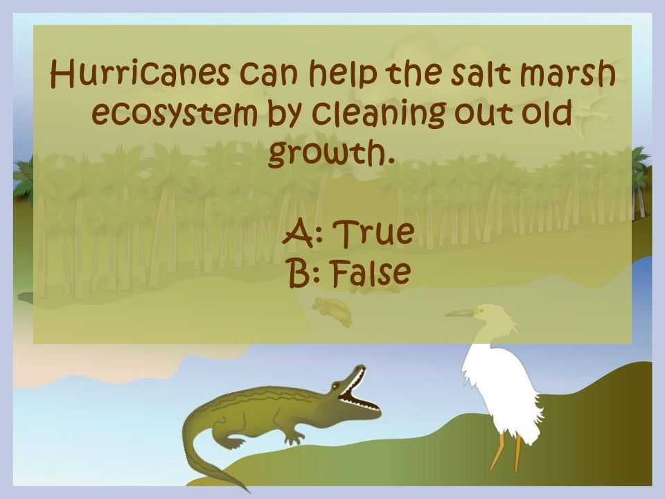 Hurricanes can help the salt marsh ecosystem by cleaning out old growth. A: True B: False