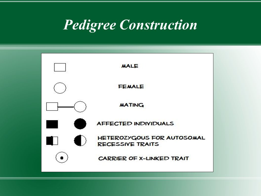 Pedigree Construction