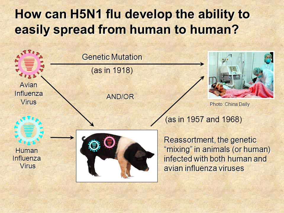 Human Influenza Virus Virus How can H5N1 flu develop the ability to easily spread from human to human.