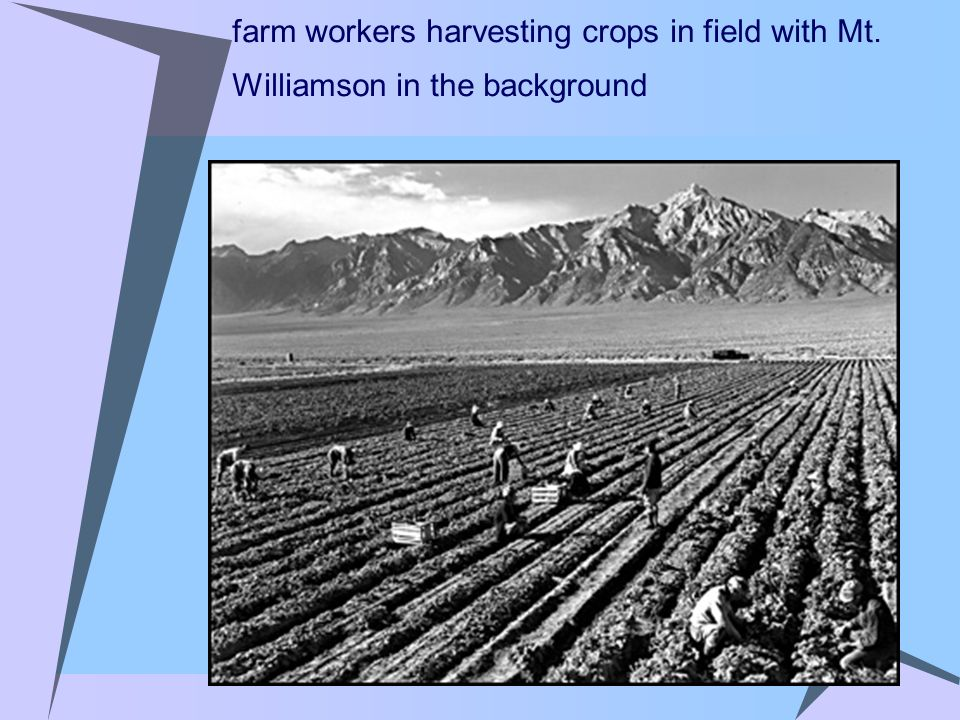 farm workers harvesting crops in field with Mt. Williamson in the background