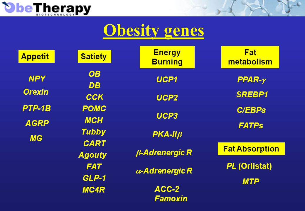 Obesity genes Appetit NPY Orexin PTP-1B AGRP MG Satiety OB DB CCK POMC MCH Tubby CART Agouty FAT GLP-1 MC4R Energy Burning UCP1 UCP2 UCP3 PKA-II -Adrenergic R ACC-2 Famoxin Fat metabolism PPAR- SREBP1 C/EBPs FATPs PL (Orlistat) MTP Fat Absorption