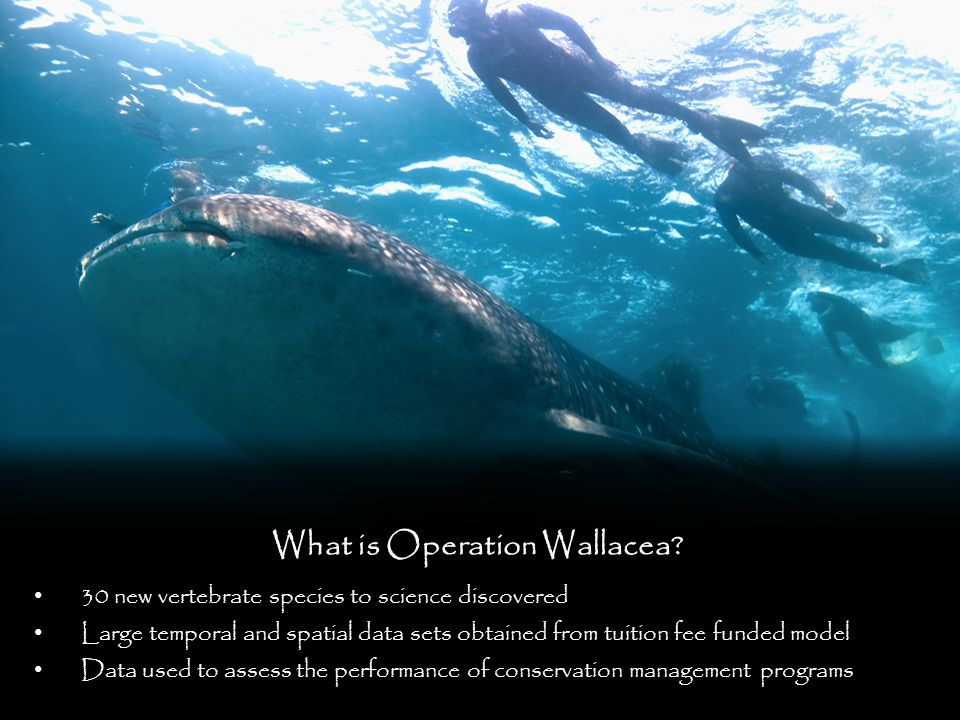What is Operation Wallacea.