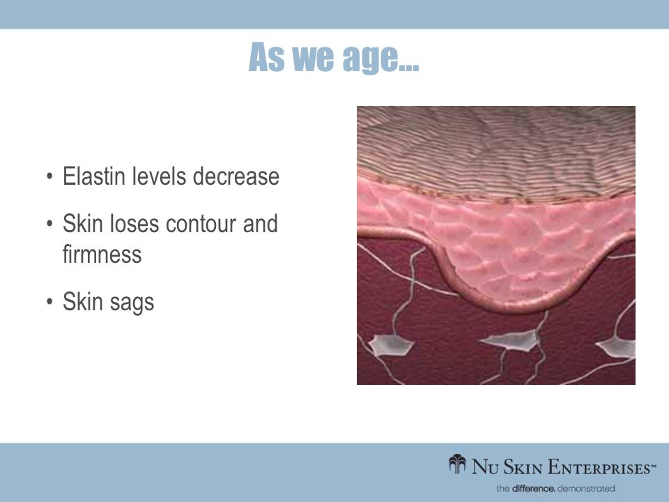 Elastin levels decrease Skin loses contour and firmness Skin sags As we age...