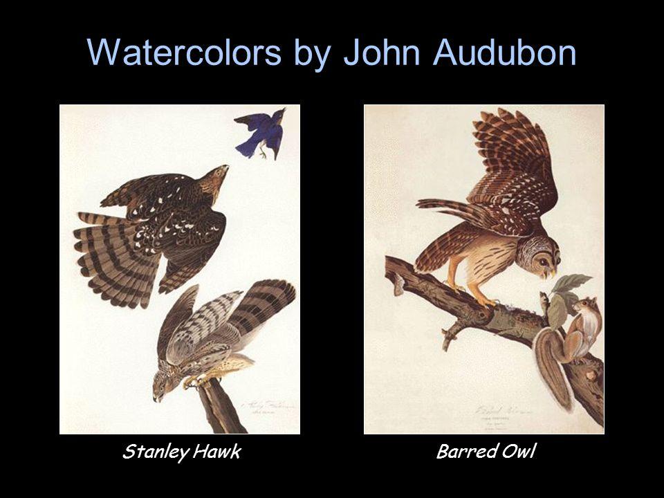 Watercolors by John Audubon Stanley HawkBarred Owl