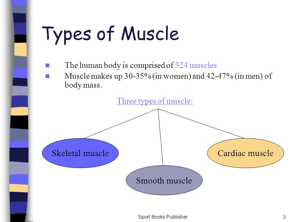 Sport Books Publisher3 Types of Muscle The human body is comprised of 324 muscles Muscle makes up 30-35% (in women) and 42-47% (in men) of body mass.
