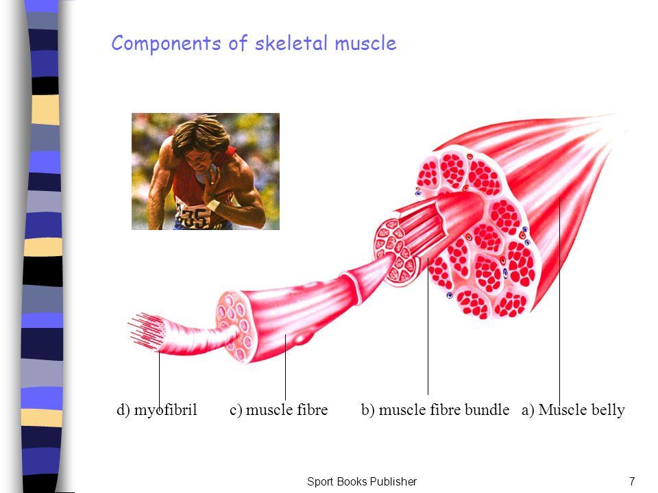 Sport Books Publisher7 d) myofibril c) muscle fibre b) muscle fibre bundle a) Muscle belly Components of skeletal muscle