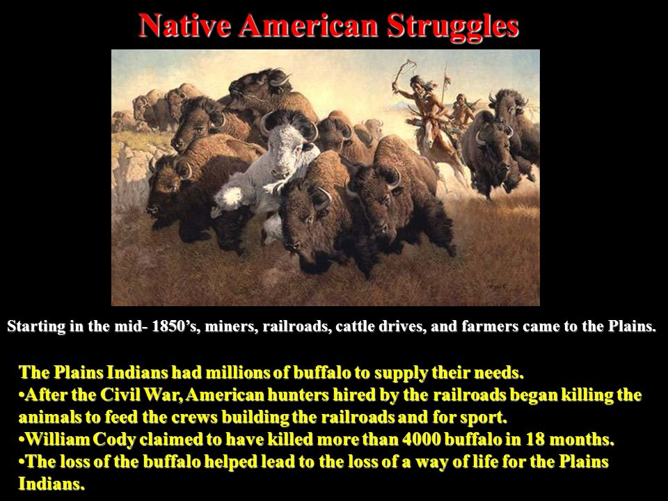 The Plains Indians had millions of buffalo to supply their needs.