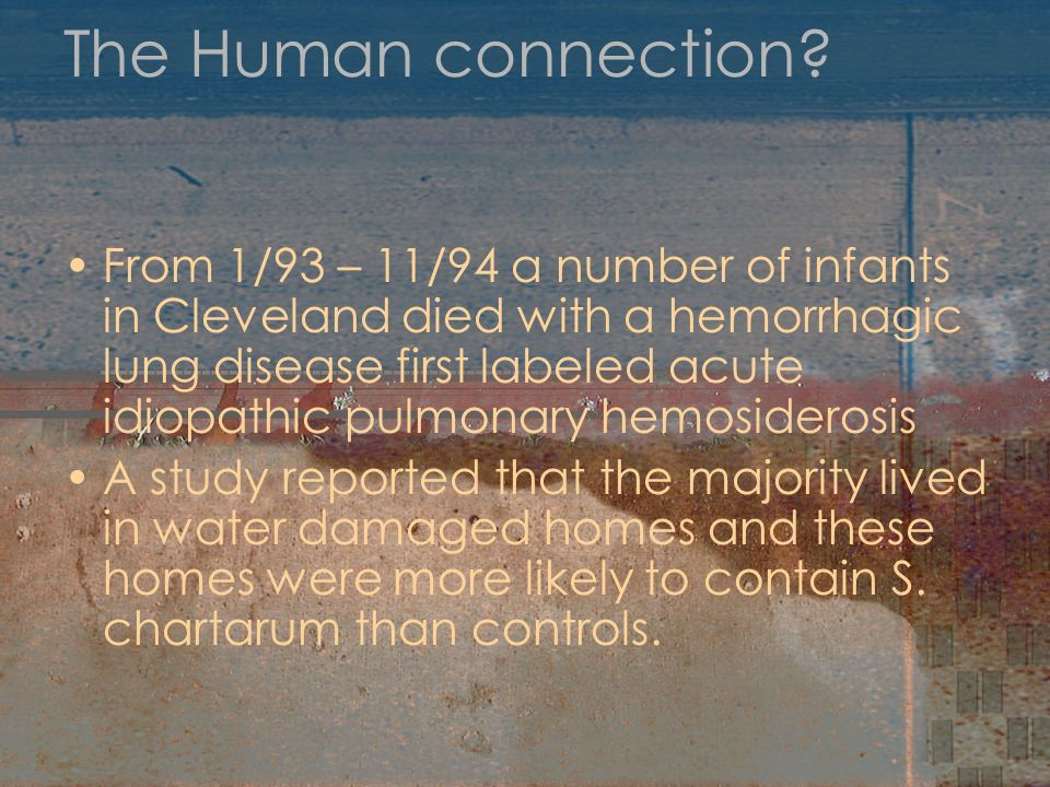 The Human connection? From 1/93 – 11/94 a number of infants in Cleveland died with a hemorrhagic lung disease first labeled acute idiopathic pulmonary