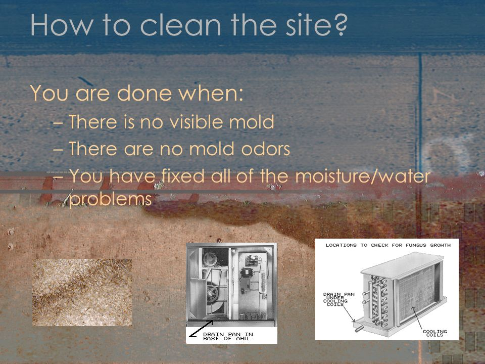 How to clean the site? You are done when: –There is no visible mold –There are no mold odors –You have fixed all of the moisture/water problems