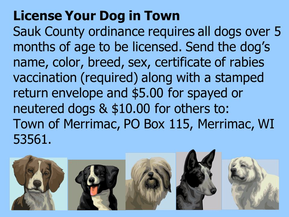 License Your Dog in Town Sauk County ordinance requires all dogs over 5 months of age to be licensed. Send the dogs name, color, breed, sex, certifica