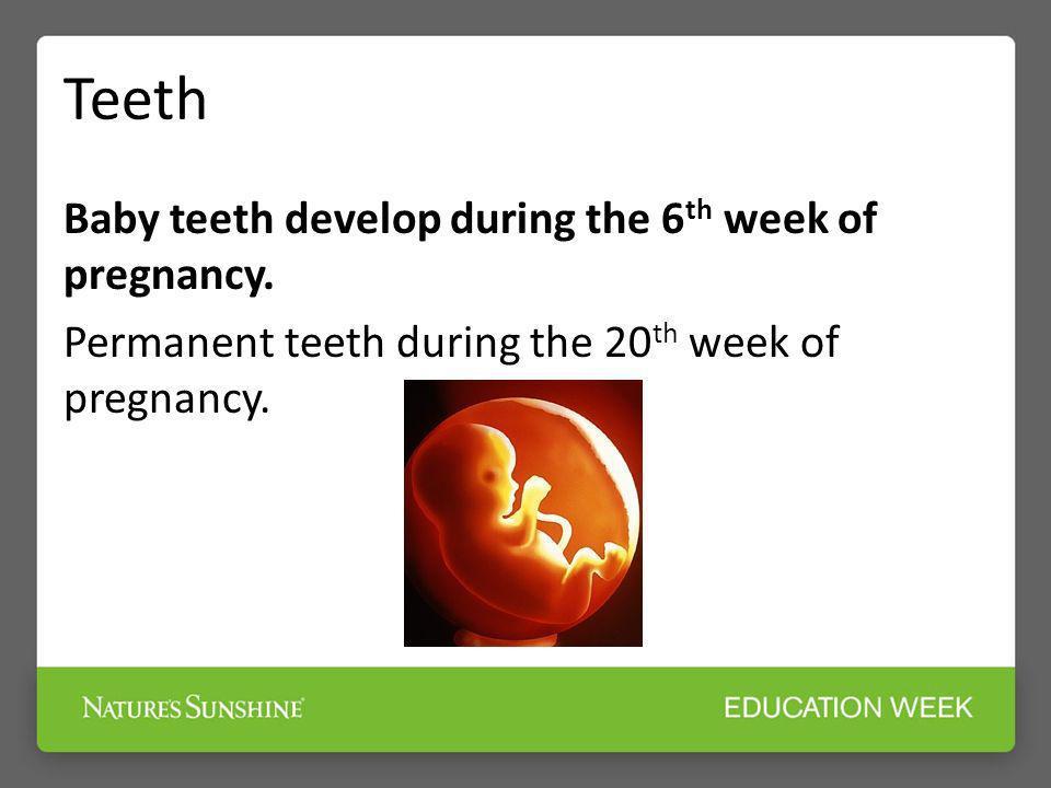 Teeth Baby teeth develop during the 6 th week of pregnancy. Permanent teeth during the 20 th week of pregnancy.