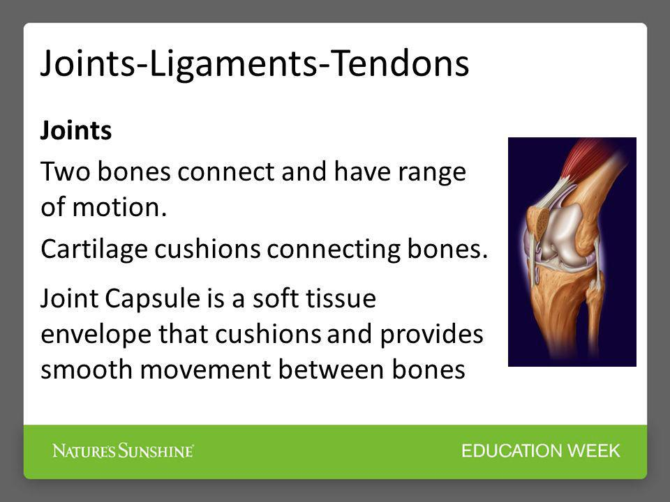 Joints-Ligaments-Tendons Joints Two bones connect and have range of motion. Cartilage cushions connecting bones. Joint Capsule is a soft tissue envelo