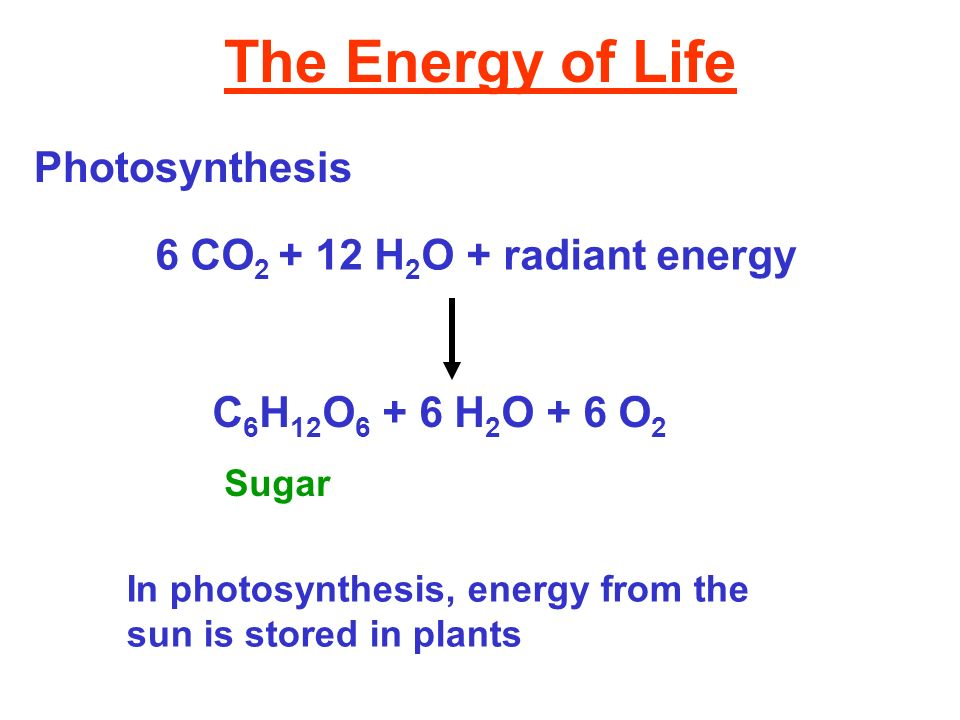The Energy of Life Photosynthesis 6 CO 2 + 12 H 2 O + radiant energy C 6 H 12 O 6 + 6 H 2 O + 6 O 2 Sugar In photosynthesis, energy from the sun is st