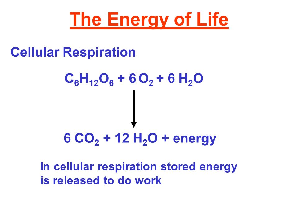 The Energy of Life Cellular Respiration C 6 H 12 O 6 + 6 O 2 + 6 H 2 O 6 CO 2 + 12 H 2 O + energy In cellular respiration stored energy is released to