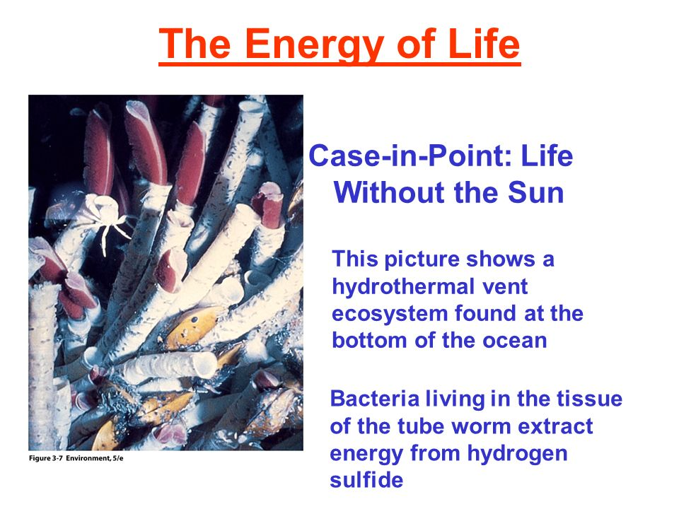 The Energy of Life Case-in-Point: Life Without the Sun This picture shows a hydrothermal vent ecosystem found at the bottom of the ocean Bacteria livi