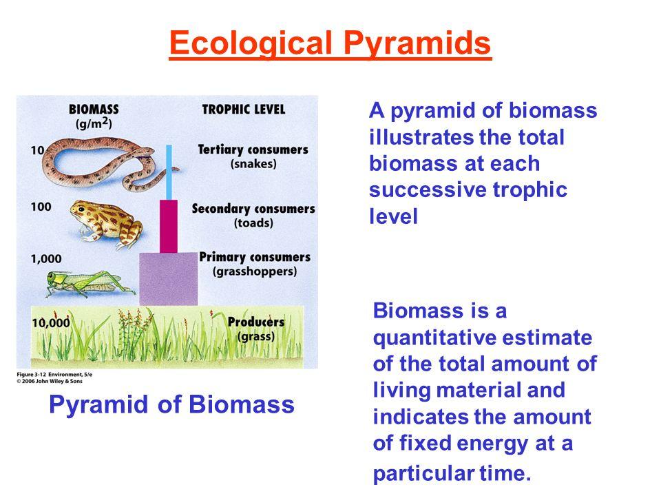 Ecological Pyramids Pyramid of Biomass A pyramid of biomass illustrates the total biomass at each successive trophic level Biomass is a quantitative e