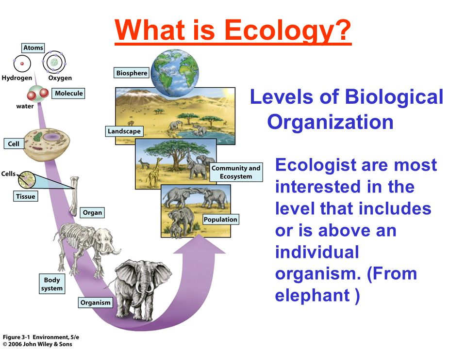 What is Ecology? Levels of Biological Organization Ecologist are most interested in the level that includes or is above an individual organism. (From