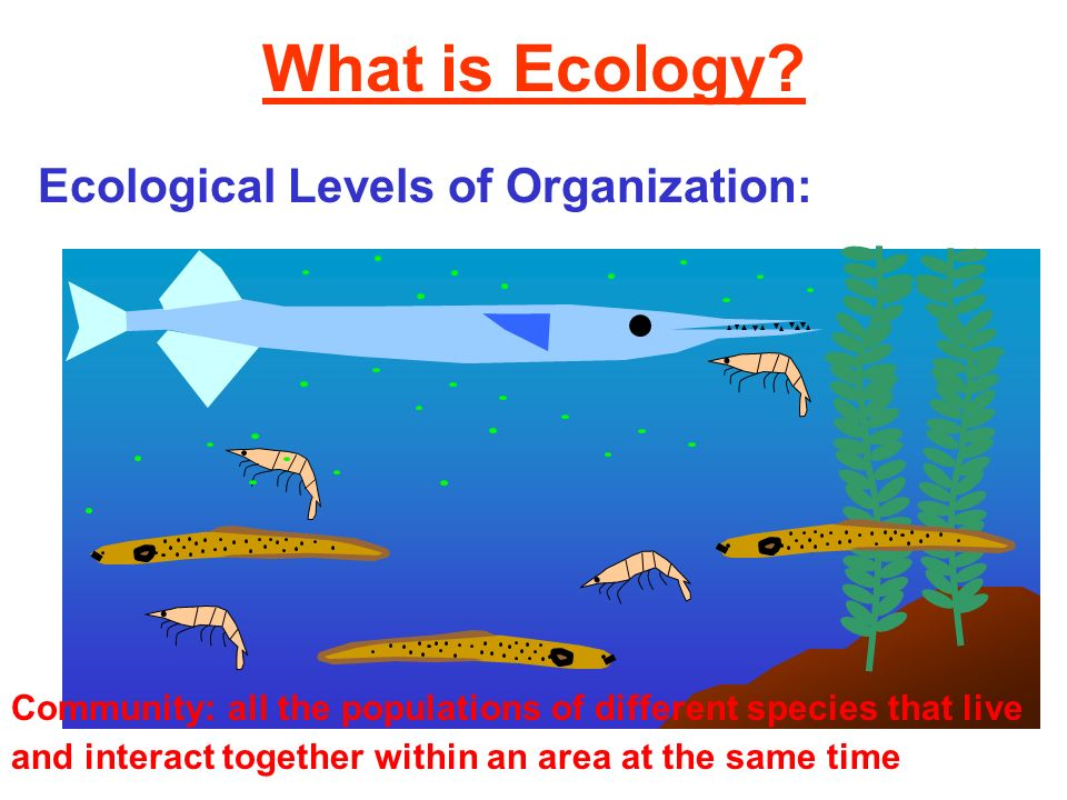 What is Ecology? Ecological Levels of Organization: Community: all the populations of different species that live and interact together within an area