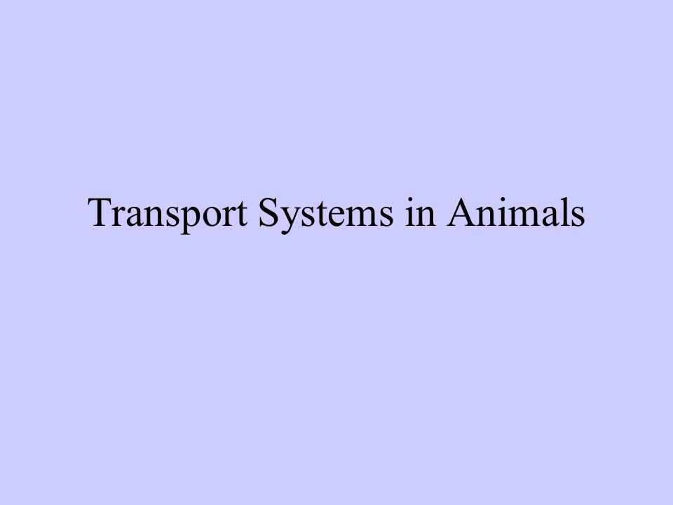 Transport Systems in Animals