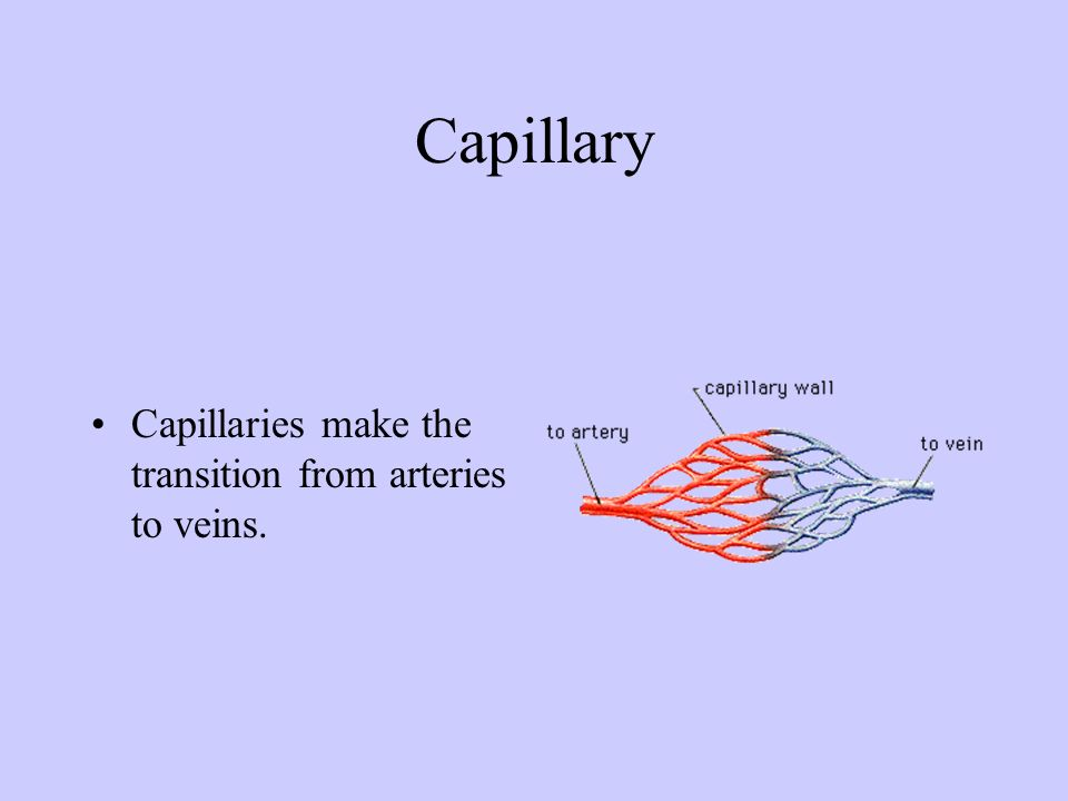 Capillary Capillaries make the transition from arteries to veins.