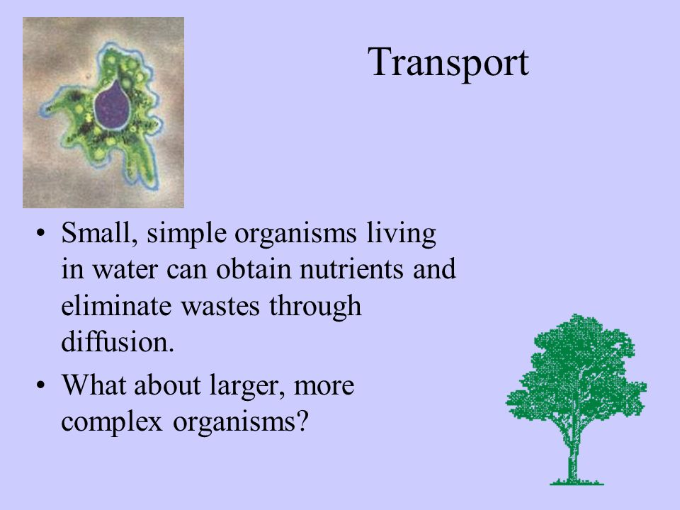 Transport Small, simple organisms living in water can obtain nutrients and eliminate wastes through diffusion. What about larger, more complex organis
