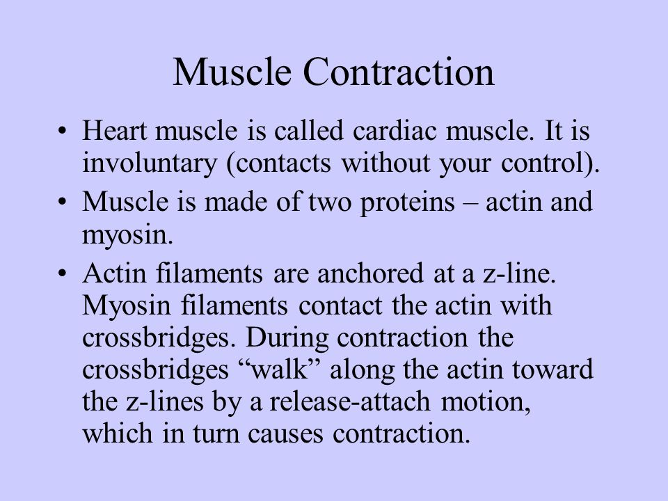 Muscle Contraction Heart muscle is called cardiac muscle. It is involuntary (contacts without your control). Muscle is made of two proteins – actin an