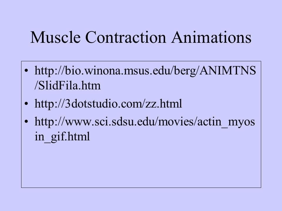 Muscle Contraction Animations http://bio.winona.msus.edu/berg/ANIMTNS /SlidFila.htm http://3dotstudio.com/zz.html http://www.sci.sdsu.edu/movies/actin
