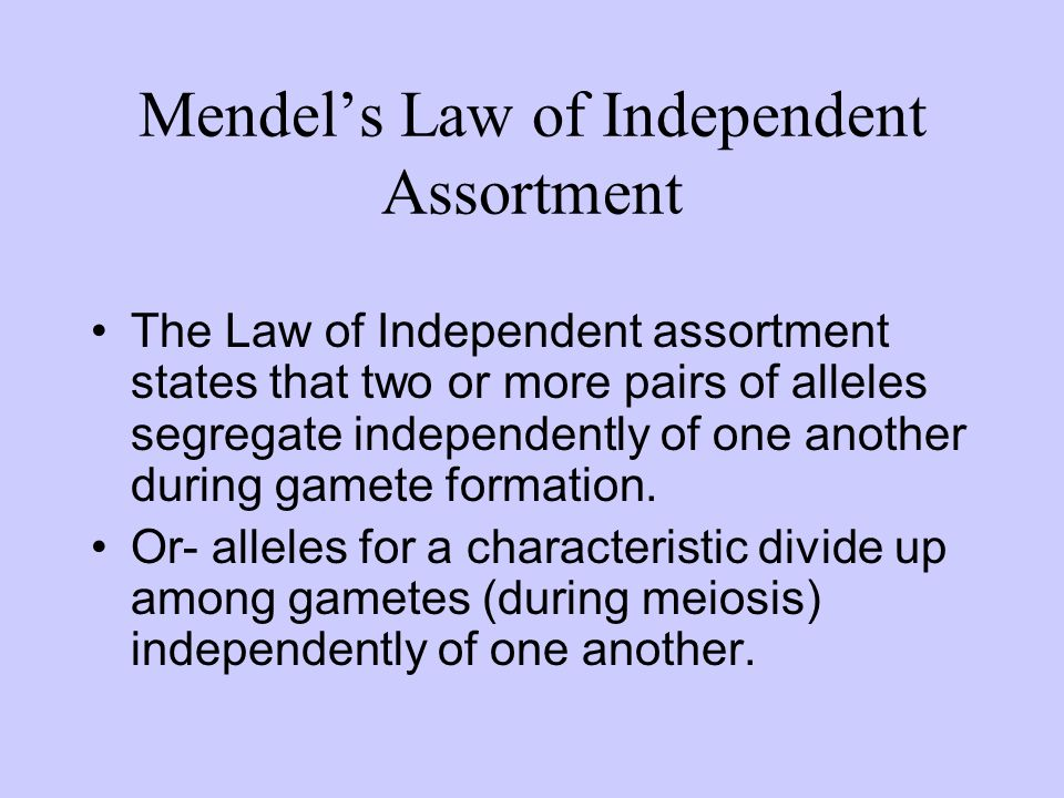 Mendels Law of Independent Assortment The Law of Independent assortment states that two or more pairs of alleles segregate independently of one anothe