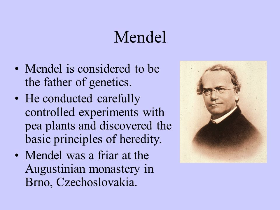 Mendel was experimenting with flowers in the monastery s gardens, trying to develop new color variations.