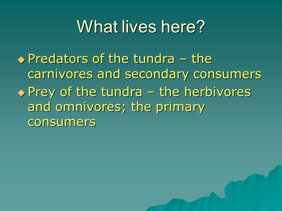 What lives here? Predators of the tundra – the carnivores and secondary consumers Predators of the tundra – the carnivores and secondary consumers Pre