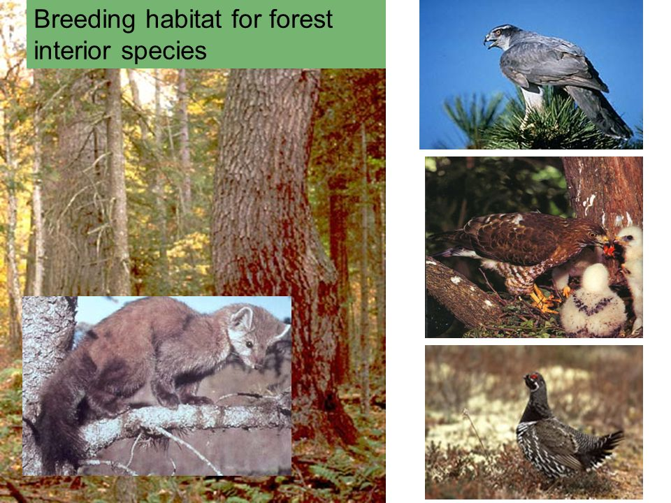 Breeding habitat for forest interior species