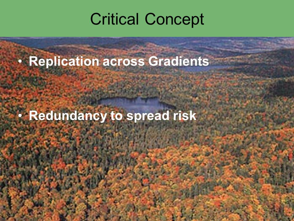Critical Concept Replication across Gradients Redundancy to spread risk