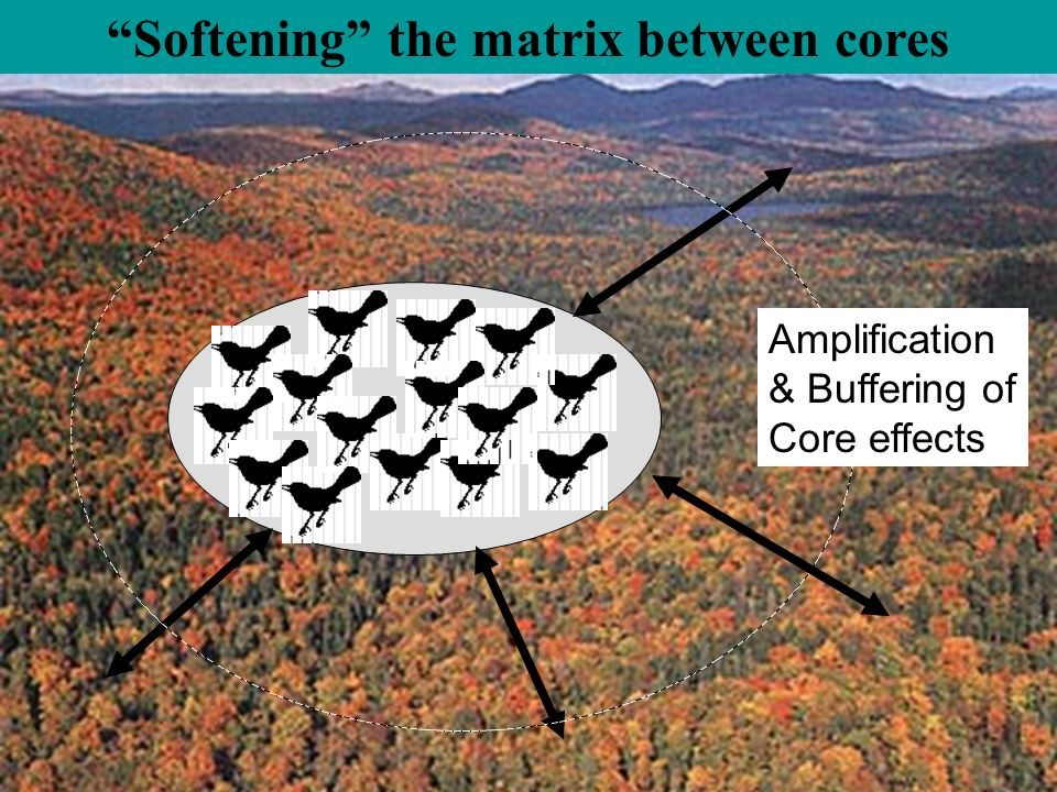 Softening the matrix between cores Amplification & Buffering of Core effects