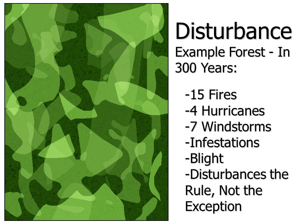 Disturbance Example Forest - In 300 Years: -15 Fires -4 Hurricanes -7 Windstorms -Infestations -Blight -Disturbances the Rule, Not the Exception