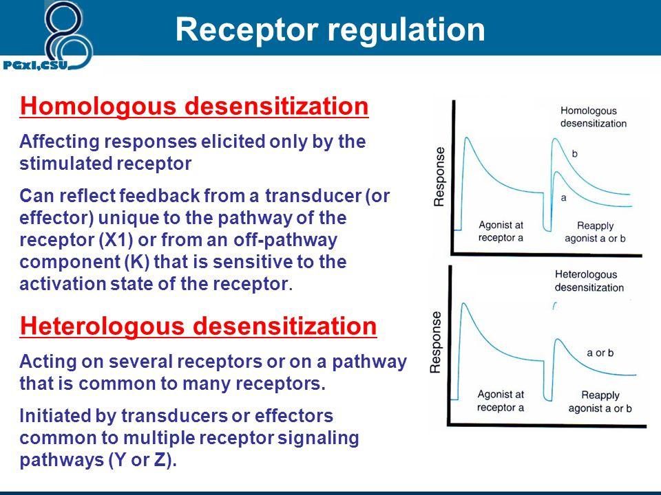 7. Receptor regulation Sensitization hypersensitization, supersensitivity or Up-regulation 1.Prolonged/continuous use of receptor blocker 2.Inhibition