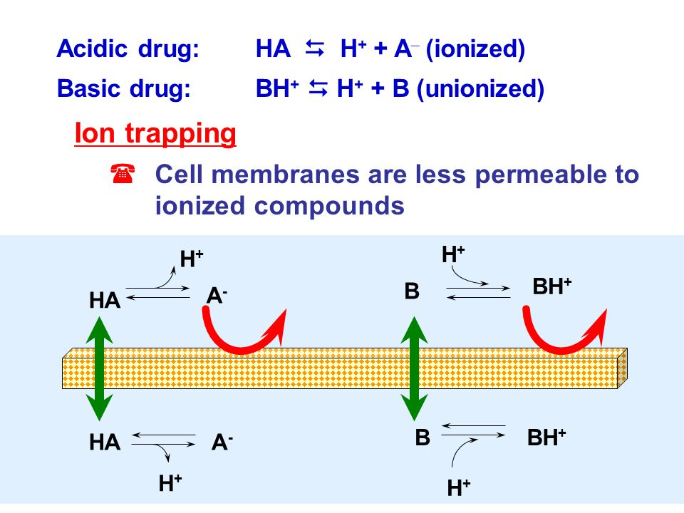1 Simple diffusion Passive process, concentration gradient dependent, requires no energy Molecules move from area of high to low concentration Rate of
