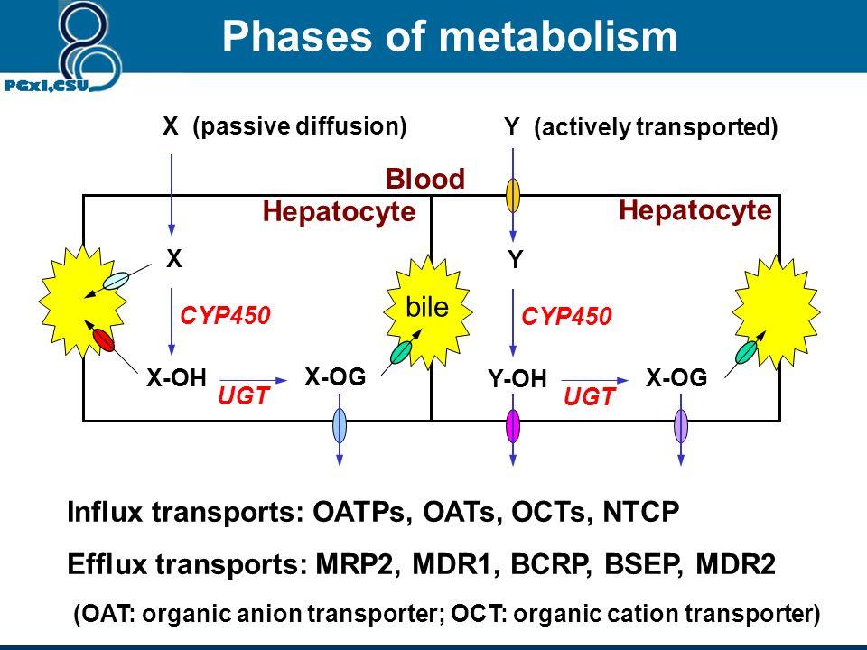 Drug Oxidation (Cytochrome P450) Conjugation (Glucuronidation, etc Conjugation Stable adducts Metabolites No-polar species Billary elimination (Stool)