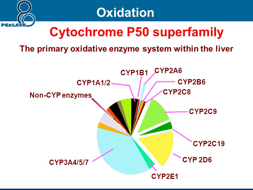 X (passive diffusion) X CYP450 X-OH UGT X-OG Y (actively transported) Y CYP450 Y-OH UGT X-OG bile Blood Hepatocyte Phases of metabolism Influx transpo