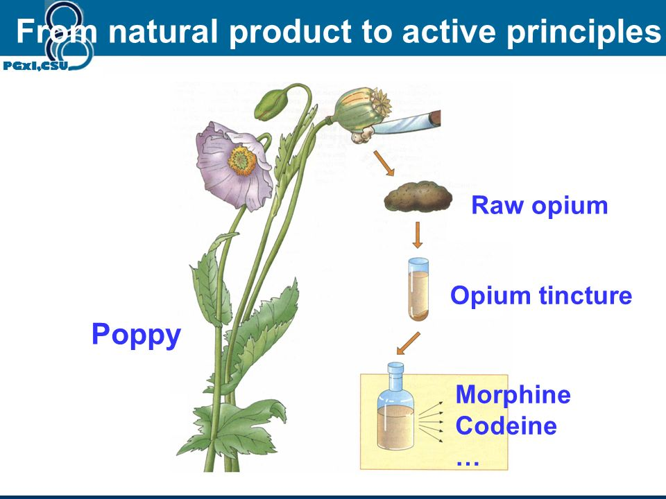 Poppy Raw opium Opium tincture Morphine Codeine … From natural product to active principles