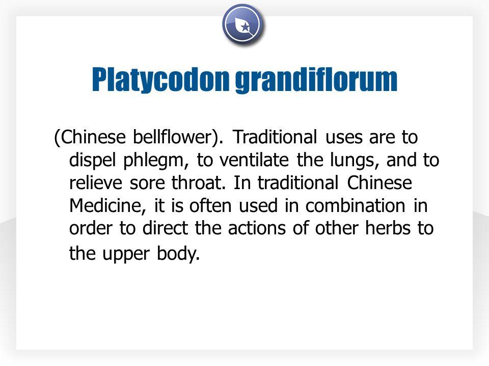 Platycodon grandiflorum (Chinese bellflower).