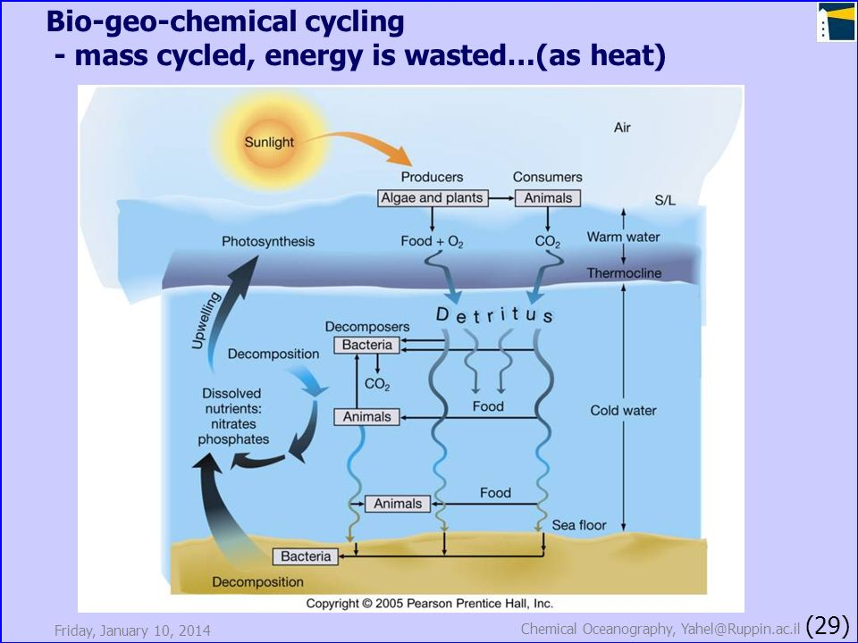 Friday, January 10, 2014 Chemical Oceanography, Yahel@Ruppin.ac.il (29) Bio-geo-chemical cycling - mass cycled, energy is wasted…(as heat)