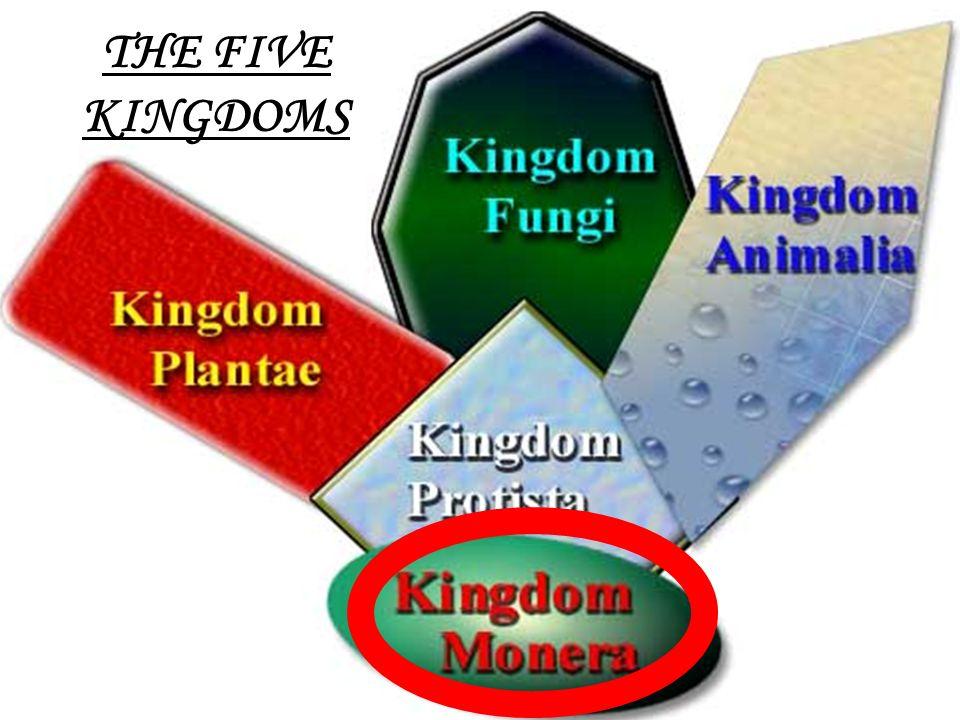 1 THE FIVE KINGDOMS