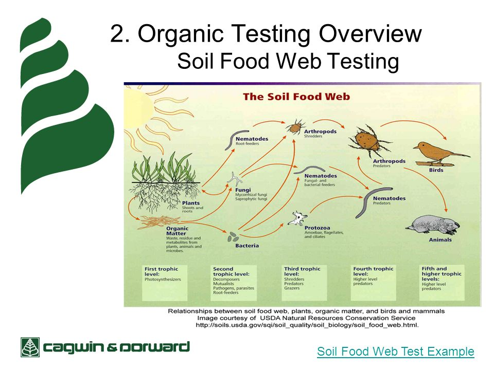 2. Organic Testing Overview Soil Food Web Testing Soil Food Web Test Example