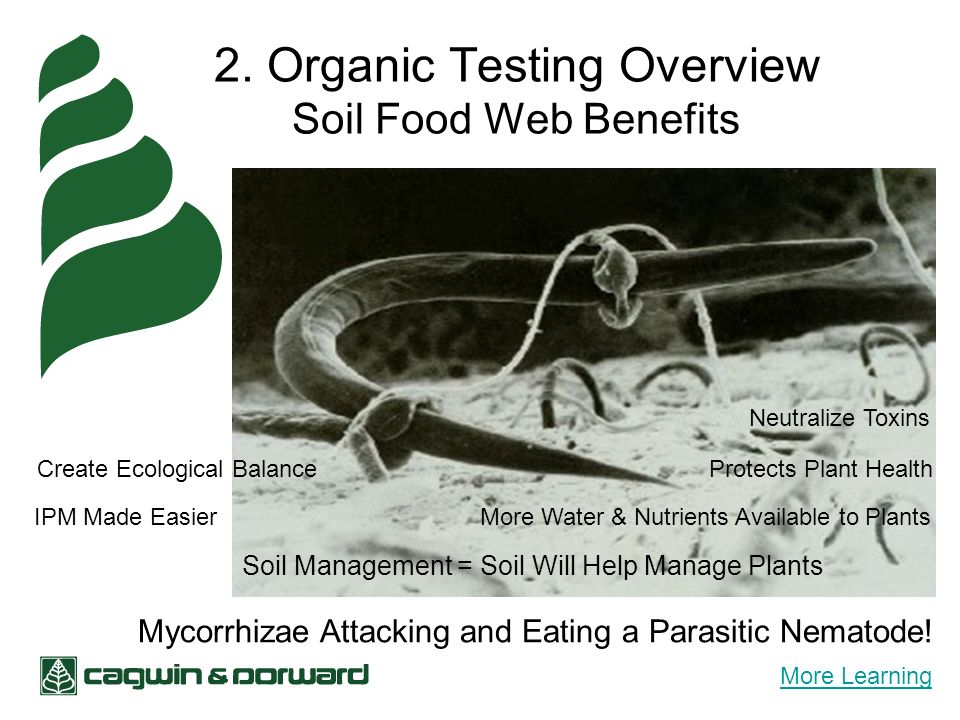 2. Organic Testing Overview Soil Food Web Benefits Mycorrhizae Attacking and Eating a Parasitic Nematode! More Water & Nutrients Available to Plants N