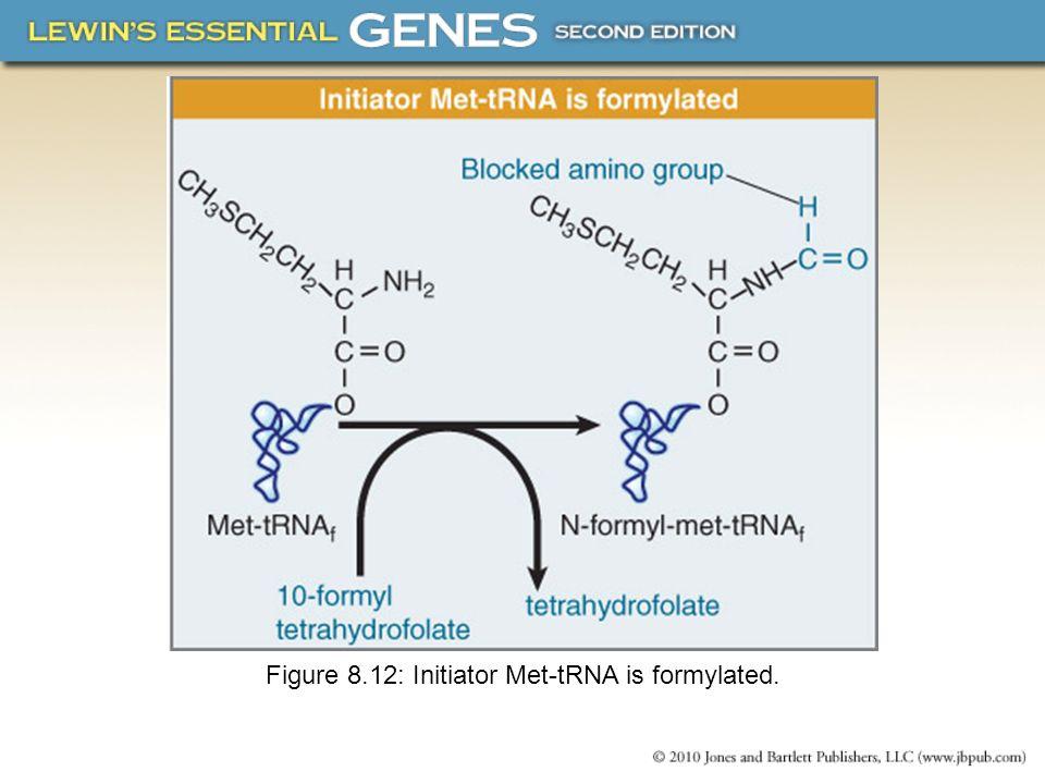 Figure 8.12: Initiator Met-tRNA is formylated.