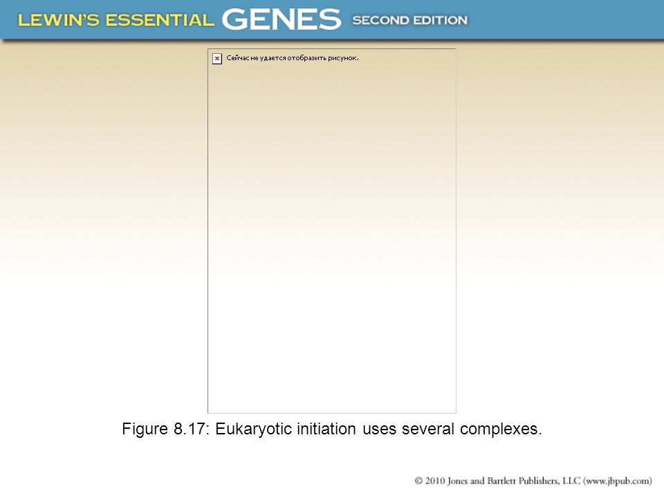 Figure 8.17: Eukaryotic initiation uses several complexes.
